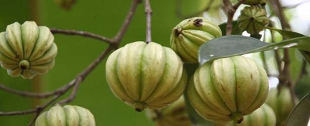 Why Choose Garcinia Cambogia?